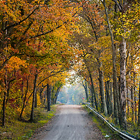 American fall scene with yellow leaves on trees either side of a small road leading into distance