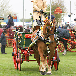 Notts County Show 2013  Heavy Horse Turnouts