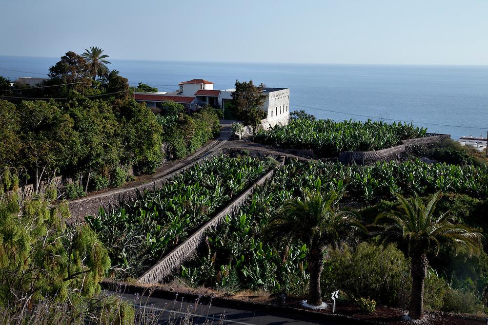 Banana plantation, close to Los Gigantes, South Tenerife.