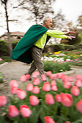 The Bulb Guy Rich Santoro runs through his 10,000 Spring bulb garden with his arms extended pretending to be Super Bulb Guy at his home in Berryessa, San Jose, California, on March 17, 2014. (Stan Olszewski/SOSKIphoto)