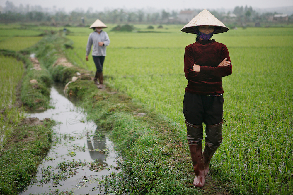 Vietnam. March 12th 2007. .Two Vietamese women in a paddy on the road between Hanoi and Ha Long.