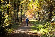 Bij Austerlitz loopt een jongetje door het bos op een mooie herfstdag.<br /> <br /> At Austerlitz a boy walks through the woods on a beautiful autumn day.