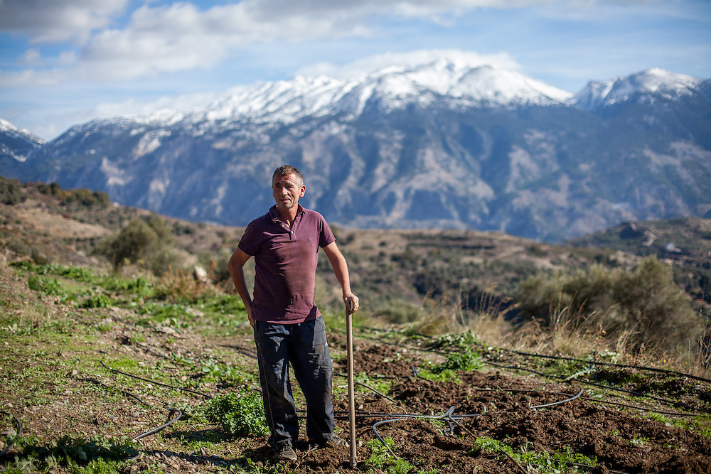 A guestworker from Albania is working on the fields with the White Mountains (Lefka Ori) in the back seen from Maza, a mountain village located close to Palaiochora which is a small town in Chania regional unit on the island of Crete, Greece.