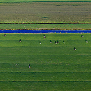 Frisian cows and birds on a farmland are seen from above