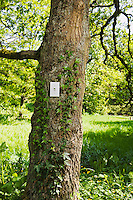A light switch on a tree trunk in a forest / Park like setting on a sunny day.