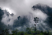 Misty rainforest in Sarawak, Borneo, not far from Kubah National Park.