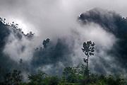 Misty rainforest in Sarawak, Borneo, not far from Kubah National Park.