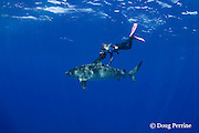 Stefanie Brendl swims with tiger shark, Galeocerdo cuvier, North Shore, Oahu, Hawaii, USA ( Central Pacific Ocean ) MR 389