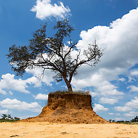 Africa, Botswana, Lone tree on eroded hilltop in Kalahari Desert