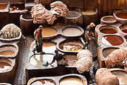 Chouwara Tannery, Fez Medina, Morocco, 2016-12-03.<br /><br />Fez is famous for it&rsquo;s leather artisanal crafts and the Chouwara tannery (or Chouara Tannery) is one of the most impressive sights in the Medina. Once the centre of leather production (over taking Cordoba in Spain during the 16th Century) the tannery still operates today as it did many centuries ago and dates back as far as the 11th Century. Cow, sheep, goat and camel hides are preserved and dyed at the tanneries and used to make clothing and artisanal products, which are sold throughout the medina.&nbsp;<br /><br />The entire old, walled medina of Fez el Bali is a UNESCO World Heritage protected site and is considered to be the best preserved example of a medieval medina in the Arab world. It&rsquo;s labyrinth of streets are notoriously difficult to navigate and most of it&rsquo;s layout, madrasas, fondouks, palaces, mosques and fountains date back to the 13th and 14th centuries, when Fez was the capital city of Morocco. It also is thought to be the largest pedestrianised space in the world. The heart of the medina is full of amazing Arab and Al-Andalus architecture and design, with a high concentration of stunning mosaic zelij displays.