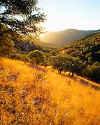 0104-1000C ~ Copyright:  George H. H. Huey ~ View down Montezuma Canyon at sunrise with emory oaks [Quercus emoryi]. Huachuca Mountains.  The Coronado expedition passed here in 1540.  Coronado National Memorial, Arizona.
