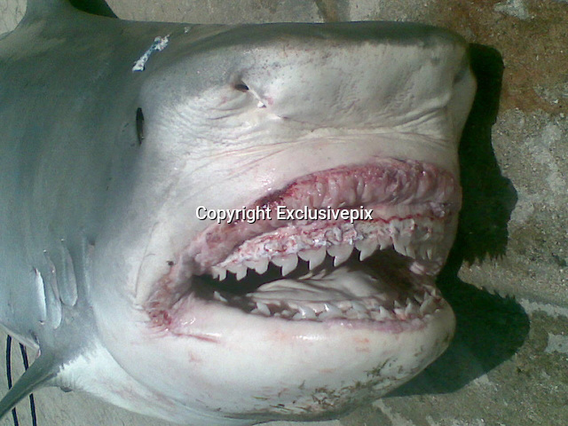 Missing sailor's remains found inside giant shark caught and killed off 'Jaws Beach'<br /> <br /> Human remains found in the belly of a shark are probably those of a man who disappeared from a boat off Jaws Beach - on an island where one of the Jaws movies was filmed, police in the Bahamas said.<br /> Fingerprints were used to identify Judson Newton, although they are still waiting for DNA test results, Assistant Police Commissioner Hulan Hanna said.<br /> It is unclear if the 43-year-old was alive when he was eaten.<br /> Mr Newton went on a boating trip with friends off Jaws Beach on New Providence Island on August 29 and encountered engine trouble.<br /> <br /> Rescuers who responded to a call for help found three men on board who said that Mr Newton and a friend jumped into the water to try to swim back to shore. <br /> Officials launched a search for them, but neither was found.<br /> On September 4, a local investment banker caught the 12ft tiger shark while on a deep-sea fishing trip and he said a left leg popped out of its mouth as they hauled it in.<br /> When officers with the island's defence force cut the shark open, they found the right leg, two severed arms and a severed torso.<br /> One of Mr Newton's friends, Samuel Woodside, 37, told reporters that he was surprised when he heard police say Mr Newton probably drowned.<br /> To me, he was always a strong swimmer,' Mr Woodside said. 'I don't know what happened.'<br /> Mr Woodside said he and Mr Newton were childhood friends and would go fishing almost every weekend when Mr Newton was not working as a sailor on cargo boats or as a chef at local restaurants.<br /> Mr Newton did not favour one fishing spot over another, Mr Woodside said.<br /> 'He was a sailor, you see,' he said. 'Anywhere where he could get a fishing line, he would go there.'<br /> Mr Newton was not married and did not have children, but he left behind his mother and a brother, Mr Woodside said.<br /> The beach near where Mr Newton was l