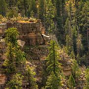 Sunlit profile of the rim of Walnut Canyon