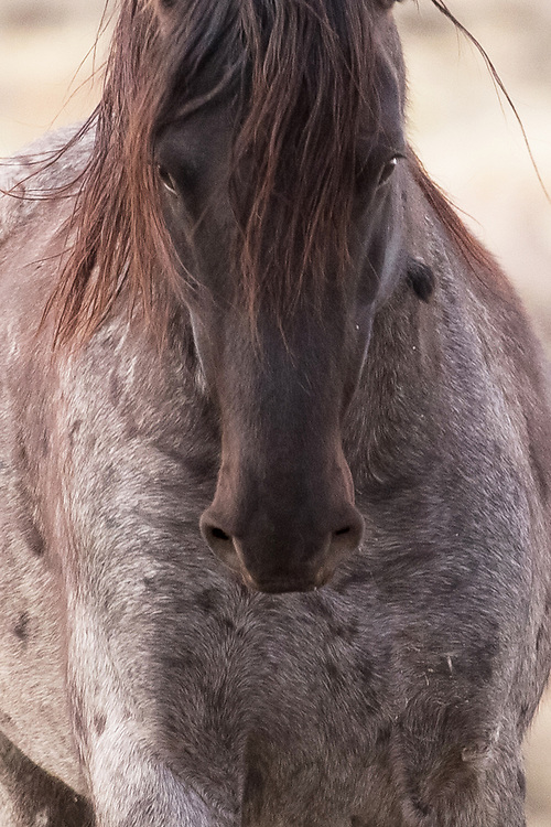 I don't know the name of this handsome red roan stallion, but when our eyes met, I knew he was something special. I'm counting the days until I see him again.