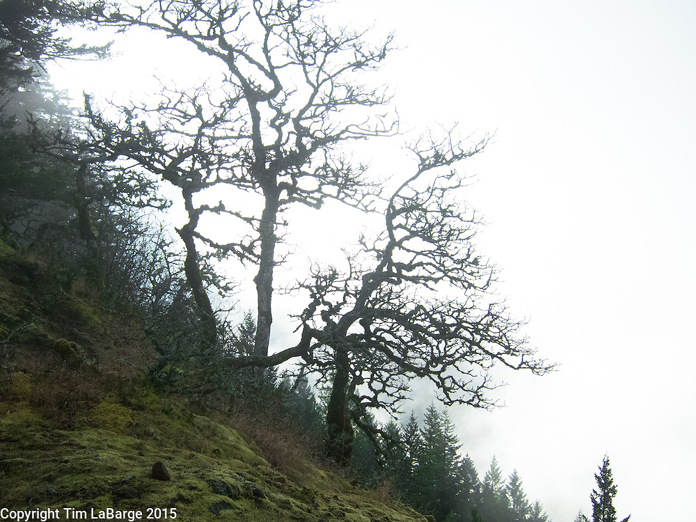 Photo © Tim LaBarge 2015