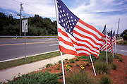 American flags lined along the street