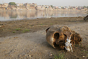 A human skull on the sandy banks of the Ganges River. across from the cremation ghats in Varanasi.