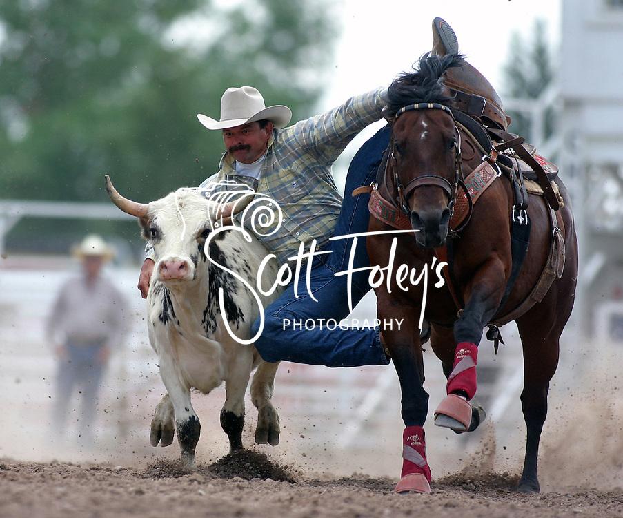 Steer Wrestling, 2004 Cheyenne Frontier Days Rodeo, Cheyenne WY, July 2004