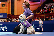 Hattie the new Albert Hall ball boy,  with her handler.<br /> Ball dogs step onto the court at the Royal Albert Hall for the first time in UK history during this year's Champions Tennis event in association with Skinner's Pet Food, with dogs provided by Canine Partners. <br /> During the Champions Tennis match at the Royal Albert Hall, London, United Kingdom on 6 December 2018. Picture by Ian Stephen.
