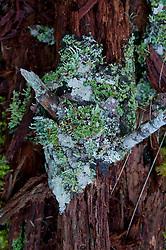 Fallen Tree and Lichens, Shaw Island, Washington, US