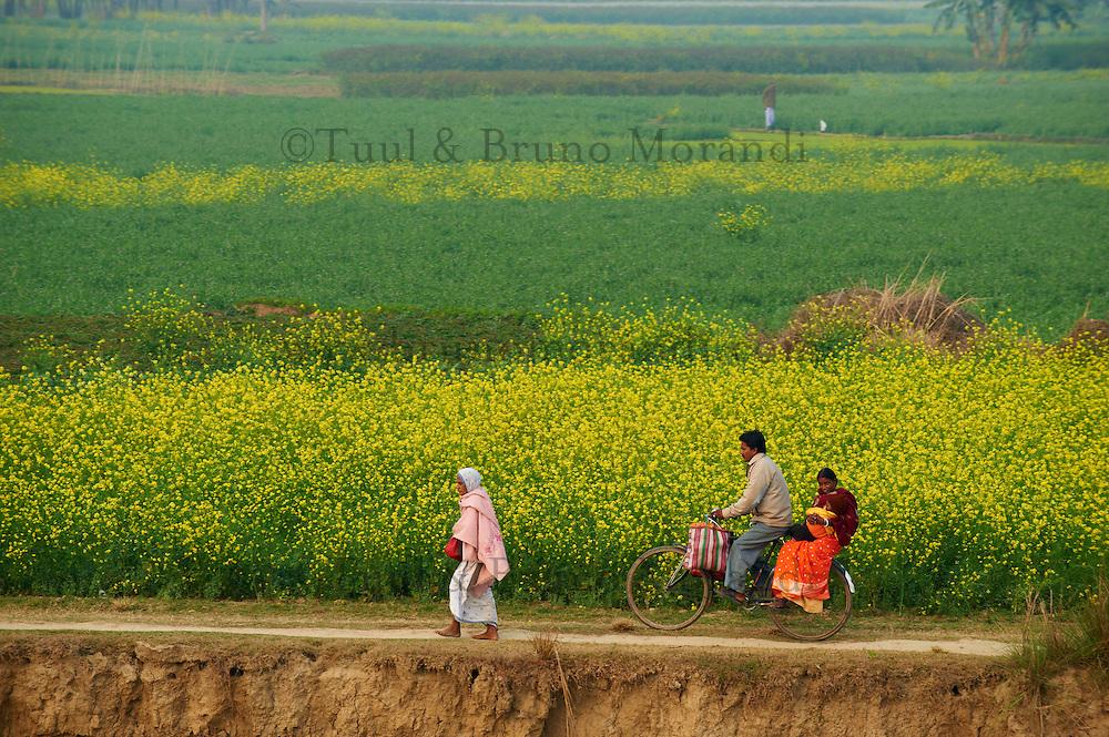 Inde, Bengale-Occidental, villages sur les rives de la riviere Hooghly defluent du Gange // India, West Bengal, villages on the bank of the Hooghly river, part of Ganges river