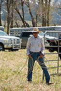Cowboys, sorting calves, branding, Lazy SR Ranch, Wilsall, Montana, Lee Pinkerton