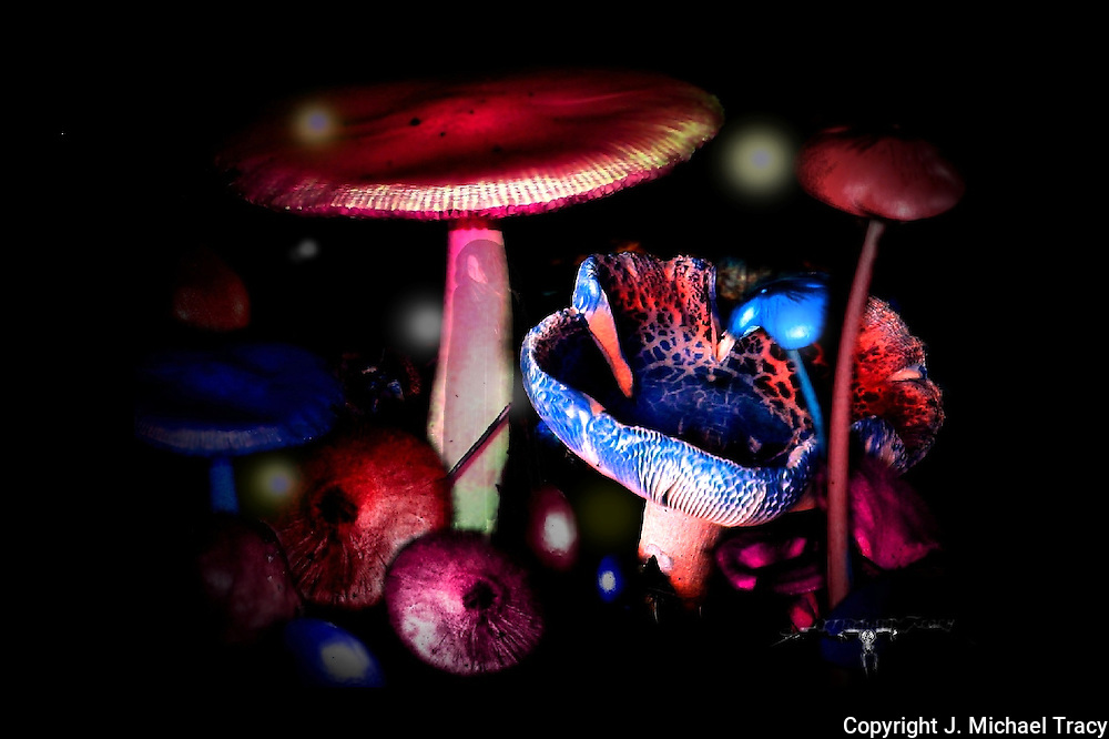 A fantasy world with florescent fungi, fairies, witches, orbs and other mystical beings.