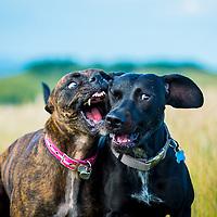 Penny and Ziggy