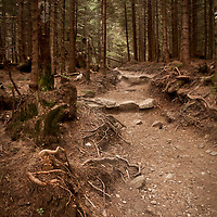 Friendly forest with fairy-like path with roots and stones in warm colours looking like wonderland