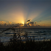 A Florida seagull at sunrise along Lantana Beach near Palm Beach, Florida.<br /> Photography by Jose More