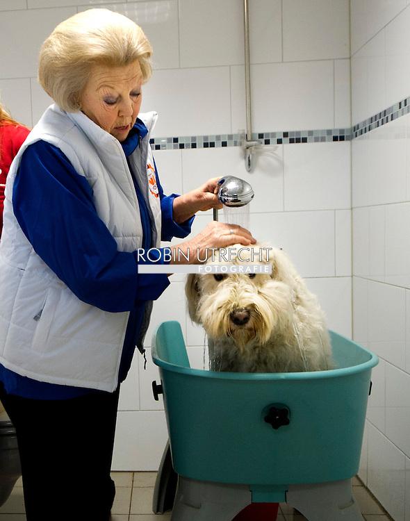 MOLENSCHOT - Koningin Beatrix wast een hond in het hondentrainingscentrum in Molenschot. De koningin hielp vrijdag mee in het kader van het landelijke vrijwilligersproject NL DOET.