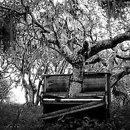 A moss-covered oak tree appears to grow through a decaying piano, in an unexpected urban art installation at Fort Ord, California