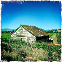 2013 May 13:  Sonoma wine country barn iphone Hipsta.