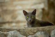 Dark grey cat laying on a wall on Hydra, Greece.