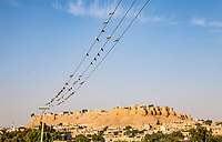 Doves on a wire above the Jaisalmer Fort, Rajasthan, India.