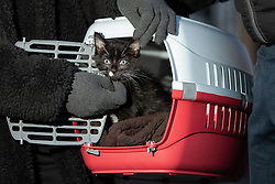 "© Licensed to London News Pictures. 16/11/2019. Bolton, UK. Residents rescue their pet cat "" Ace "" at the site of the blaze where a fire broke out overnight (15th/16th November 2019) at a block of flats known as "" The Cube "" , in Bolton Town Centre . At least two people are known to have been treated by paramedics at the scene of the six-story block , which is occupied by students of the University of Bolton and questions are now being raised about the safety of the high pressure laminate cladding used in the building's construction . Photo credit: Joel Goodman/LNP"