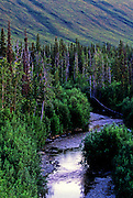 Forest, tundra and creek at night in summer. North of Bettles, Alaska