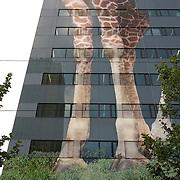 """Nederland Rotterdam 6 juni 2007 20070606.Reusachtige afbeelding van giraffe benen op het pand van de Rabobank Rotterdam Blaak ivm de geboorte van giraffe Tsavo in Diergaarde Blijdorp. Reclame uiting promotie activiteit van Rabobank met slogan """" Rabobank feliciteert Diegaarde Blijdorp! """" Komende dagen wordt de afbeelding voltooid..Rabobank Rotterdam is promoting partner van Diergaarde Blijdorp. Diergaarde Blijdorp bestaat dit jaar 150 jaar. Rabobank is promoting partner van Diergaarde Blijdorp..Sinds maart 2004 is Rabobank Rotterdam, als promoting partner tevens hoofdsponsor, verbonden met Diergaarde Blijdorp in Rotterdam. Dit partnership houdt in dat de Rabobank en de Diergaarde elkaar promotioneel ondersteunen en dat de Rabobank jaarlijks een financi'le bijdrage levert waarmee nieuwe projecten en gezamenlijke activiteiten worden mogelijk gemaakt..De verbindende schakel tussen Blijdorp en de Rabobank ligt in maatschappelijke betrokkenheid en duurzaamheid. De Rabobank staat als grootste financi'le dienstverlener in Nederland van oudsher midden in de samenleving. Zij wil betrokken zijn bij de gemeenschappen waarin zij gevestigd is. Diergaarde Blijdorp ontvangt als grootste publieksattractie van Zuid-West Nederland circa anderhalf miljoen bezoekers per jaar. Als Stichting Koninklijke Rotterdamse Diergaarde liggen haar doelstellingen op het gebied van natuurbehoud, recreatie, educatie en toegepast wetenschappelijk onderzoek. Daarmee vervult Blijdorp een belangrijke maatschappelijke functie..Doelstellingen.Sponsoring van Blijdorp is dus tevens een blijk van betrokkenheid bij de leefomgeving van de klanten van de Rabobank. Daarnaast sluit de Rabobank aan bij de groene doelstellingen en activiteiten van Blijdorp op het gebied van natuurbehoud. De Rabobank onderschrijft namelijk de opvatting  dat duurzame ontwikkeling van welvaart en welzijn een zorgvuldige omgang van natuur en milieu vergt, ofwel een gezonde balans tussen economische, sociale en ecologische activiteiten.Fo"""