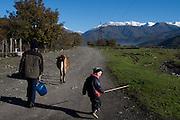 kids move a cow down a road. Duisi, Republic of Georgia.
