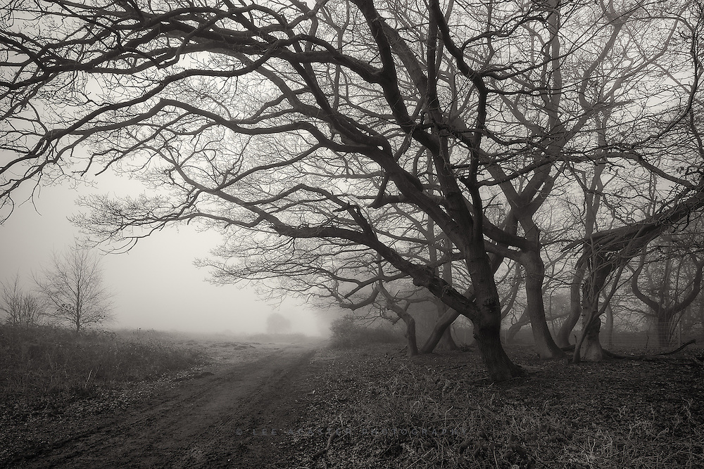 Processing some more old ones in mono. These are some favourite trees of mine at Redgrave and Lopham Fen down the road from home.
