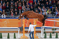 253 - Faro<br /> KWPN Hengstenkeuring - 's Hertogenbosch 2013<br /> © Dirk Caremans