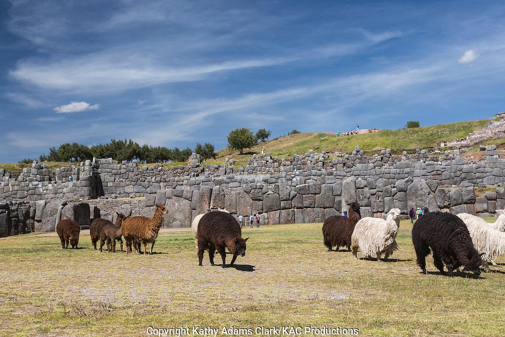 Llama, Sacsahuaman; Sacsayhuaman; Saksaq Waman, Peru.