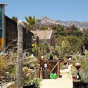 Santa barbara botanical garden. Santa Barbara,CA.