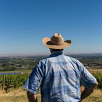Vinyard in Milton-Freewater, Oregon (Mike Watkins< Community Development Specialist of Milton-Freewater in photo)