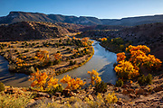 Cottonwood trees displaying their golden autumn colors grow along the Rio Chama, or Chama River, near Abiquiú, New Mexico. Rio Chama has supported human life for about 10,000 years and in 1988, a portion of the river was designated a National Wild and Scenic River by the U.S. Congress.