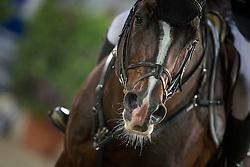 Bengtsson Rolf Goran (SWE) - Casall La Silla<br /> Longines Global Champions Tour of Antwerpen 2014<br /> © Dirk Caremans
