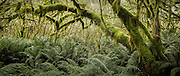 More than 700 plant species are found only in Fiordland, with the forest floor being commonly covered with thick fern and moss-draped trees.