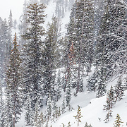Sasha Dingle skis the backcountry off of Jackson Hole Mountain Resort in Teton Village, Wyoming.