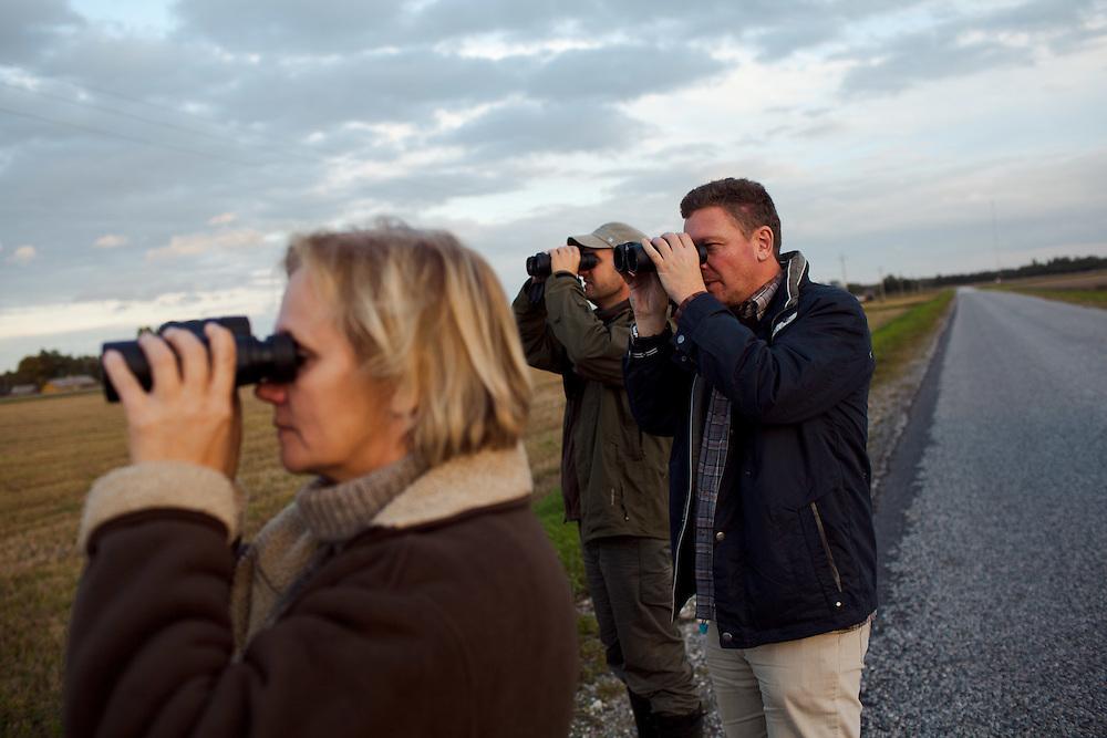 Marika, Bert and James looking at flock of birds close to dusk.