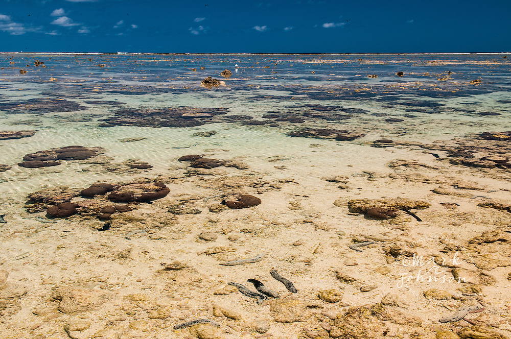 Reef flat at low tide (Eastern Reef Egret in mid-frame), Lady Elliot Island, Great Barrier Reef, Queensland, Australia
